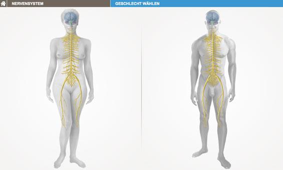 bodymap-2-565