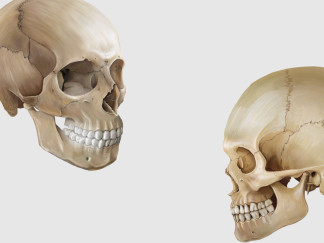 head-titelbild